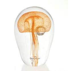 Jellyfishor12cm$180_600